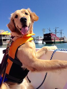cuteanimalspics:My puppy enjoyed her first day out on the boat!