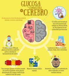 ¿Sabías la importancia de la glucosa para tu cerebro? ¡Comparte a tus amigos! Aunque la glucosa mejore tus capacidades cerebrales, nunca debes exceder su consumo. Conoce aquí: http://tugimnasiacerebral.com/mapas-conceptuales-y-mentales/que-es-un-mapa-mental-caracteristicas-y-como-hacerlos un instrumento que te permitirá elaborar infografías como ésta, sobre cualquier tema o proyecto, siendo muy fáciles de entender gracias a los componentes visuales que poseen. #mapasmentales #creatividad