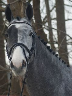 Horse with unusual markings on it's face. So cool looking