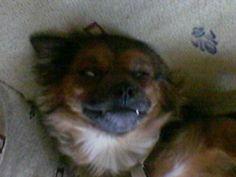 The nap of the Count Dracula's dog (La siesta del perro del conde Drácula)