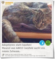 Maunzi kam als Fundtier ins Tierheim Coesfeld. http://www.tierheimhelden.de/katze/tierheim-coesfeld/hauskatze/maunzi/12296-1/  Maunzi sucht nach einem ruhigen Zuhause, in der die Dame einen Platz auf Lebenszeit finden kann.