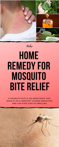 A mosquito bite is an annoyance that results in a constant itching  sensation and can even 2439faa18e