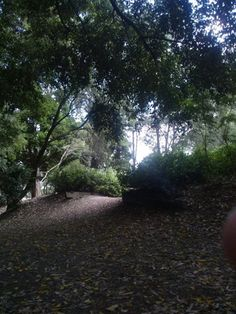 Eumundi Park - Sunshine Coast Hinterland <3