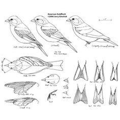 Goldfinch, Jerry Simchuk Pattern