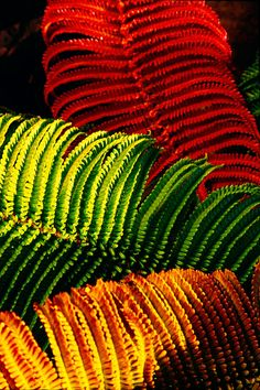 Shop for ferns art from the world's greatest living artists. All ferns artwork ships within 48 hours and includes a money-back guarantee. Choose your favorite ferns designs and purchase them as wall art, home decor, phone cases, tote bags, and more! World Of Color, Color Of Life, Cactus, Amazing Nature, Ferns, Rainbow Colors, Color Inspiration, Color Mixing, Flower Power