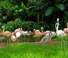 @ PARQUE DAS AVES – FOZ DO IGUAÇU http://www.olharturistico.com.br/site/parque-nacional-de-iguacu-uma-das-maravilhas-do-mundo/