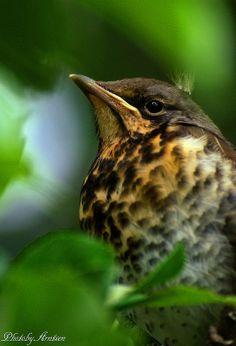 babybird | Flickr - Photo Sharing!
