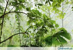 Deco Wall Foto Behangpapier In The Jungle Light - Te koop