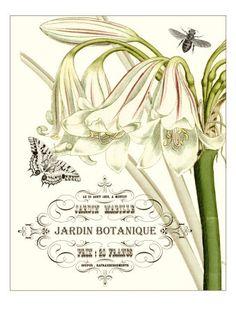Botanical, Photos and Prints at Art.com