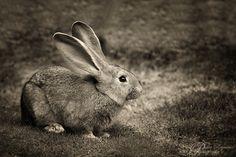 Roger Rabbit  foto  PeterReijners