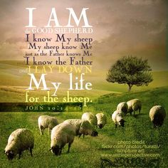 """""""I am the good shepherd; I know My sheep, and My sheep know Me, just as the Father knows Me and I know the Father, and I lay down My life for the sheep. Thank you sweet Diane. Prayer Scriptures, Bible Prayers, Faith Prayer, Scripture Pictures, Bible Verses Quotes, Faith Quotes, Religious Quotes, Spiritual Quotes, Encouragement"""