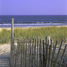 seashore on Assateague Island, VA. wild, breezy, simply gorgeous.