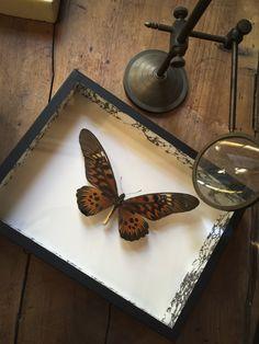 Deyrolle - Taxidermie, entomologie, curiosités naturelles - Deyrolle