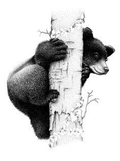 Kenny Oliver: Black Bear cub, Pen and ink on vellum. Cubs Tattoo, Bear Tattoos, Ship Tattoos, Arrow Tattoos, Word Tattoos, Animal Drawings, Art Drawings, Bear Sketch, Black Bear Cub