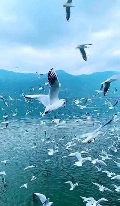 Beautiful Nature Scenes, Beautiful Photos Of Nature, Beautiful Gif, Amazing Nature, Beautiful Birds, Beautiful Landscapes, Beautiful World, Aesthetic Photography Nature, Nature Photography