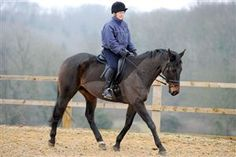 How to calm your horse - Riding | Your Horse | Videos & Advice | Riding Advice | Schooling
