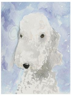 A personal favourite from my Etsy shop https://www.etsy.com/uk/listing/216187605/bedlington-terrier-dog-art-print-33