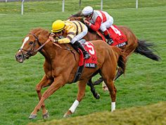 Wise Dan, the 2012 Horse of the Year, easily wins the Grade 1 Maker's 46 Mile at Keeneland April 12th in his first start of the year. The six year old gelding is by Wiseman's Ferry out of Lisa Danielle by Wolf Power. Anne M. Eberhardt photo/The Blood-Horse.