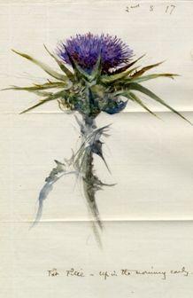 Botanical Painting by John Ruskin ~ Scottish Thistle. Botanical Drawings, Botanical Prints, Watercolor Flowers, Watercolor Art, Thistle Tattoo, Thistle Flower, Milk Thistle, John Ruskin, Scottish Thistle