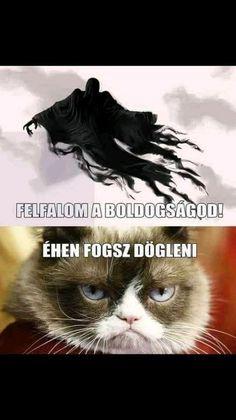 Harry Potter Humor, Harry Potter Wizard, Funny Cute, The Funny, Bad Memes, Grumpy Cat Humor, Me Too Meme, Funny Pins, Hogwarts