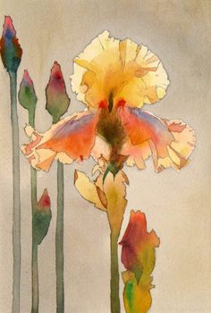 Ирисы, акварель - A nice example of inferring back-lit flowers. Watercolor Pictures, Watercolor And Ink, Watercolour Painting, Watercolor Flowers, Painting & Drawing, Watercolors, Watercolor Artists, Iris Painting, Watercolor Portraits
