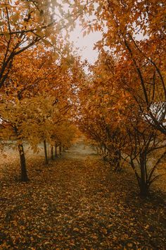 Q: are you going to see the new lion king movie ? by and winter November Pictures, October Country, Thanksgiving, Autumn Aesthetic, Autumn Cozy, Fall Wallpaper, All Nature, Deciduous Trees, Best Seasons