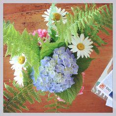 Hydrangea Daisy Fern