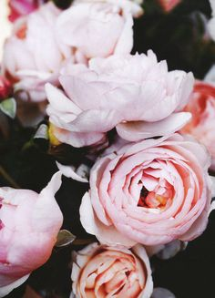 I Have A Passion for Pink Peonies!