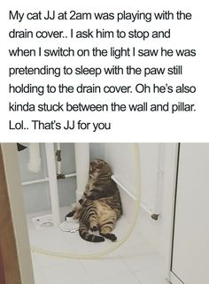 Funny-Cat-Shaming Times Asshole Cats Were Publicly Shamed For Their Hilariously Horrible Crimes Funny Animal Memes, Cute Funny Animals, Funny Animal Pictures, Cute Baby Animals, Funny Cute, Cute Cats, Funny Memes, Top Memes, Stupid Memes