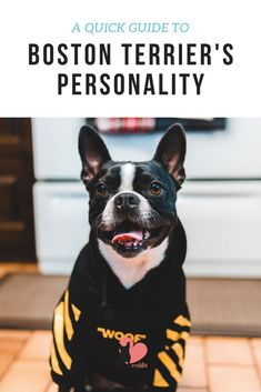Discover Boston Terriers Personality #bostonterrier #bostonterrierpuppy #bostonterrierbehaviour #bostonterrierpersonality #bostonterriertemperament #bostonterrierlove #bostonterrierowner #owningabostonterrier #dogbehaviour #doglove #dogbond #dogbonding #dogmom #dogowner #dogtemperament