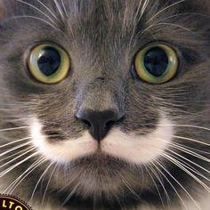 Hamilton the Hipster Cat | via Facebook