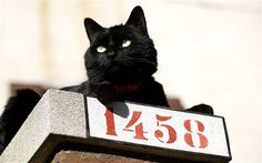 Misfortune of black cats rejected in age of 'selfie' A growing number of black cats are being housed in rescue centres, partly because they do not photograph well