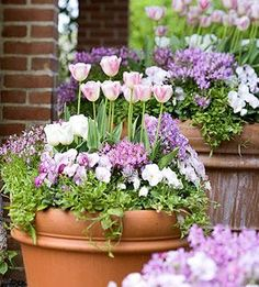 tulips, pansies and toadflax, pretty early spring container