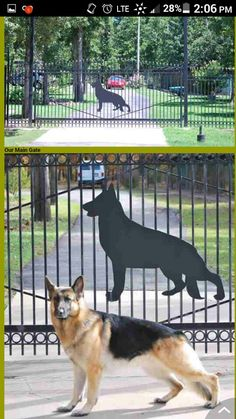 When I have my own German Shepherd  kennel i want the front gate to be like this. Ill be breeding quality American showline gsd that can do work and are perfect in health