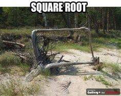 Square root - This picture made my day. #mathchat