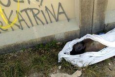 Body Dead Hurricane Katrina - Bing Images