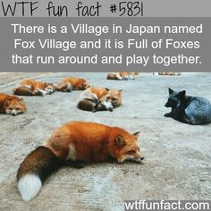 village in japan wtf fun facts WTF Facts : funny, interesting & weird factsWTF Facts : funny, interesting & weird facts Fox Facts, Animal Facts, Animal Memes, Beautiful Places To Travel, Cool Places To Visit, Places To Go, Wtf Fun Facts, Random Facts, Funny Facts