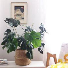 Panier boule en guise de cache-pot, décoration plantes, kinfolk home