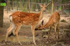 Letelt a beszoktatási idő, így a Budakeszi Vadasparkban már a nagyközönség is megnézheti a kecses állat Hungary, Kangaroo, Animals, Baby Bjorn, Animales, Animaux, Animal, Animais