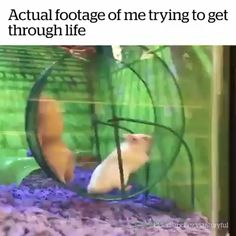 Actual Footage Of Me Trying To Get Through Life – Funny Animal Gifs Funny Animal Memes, Funny Animal Videos, Cute Funny Animals, Funny Animal Pictures, Cute Baby Animals, Funny Cute, The Funny, 9gag Funny, Funny Video Memes