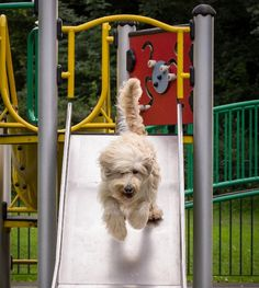 16 Pets on the Playground