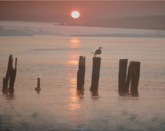 A personal favorite from my Etsy shop https://www.etsy.com/listing/125315754/photo-print-sunrise-on-popham-beach-main