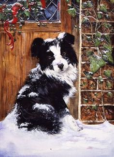 Border collie on the doorstep-watercolour-xmas card design