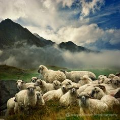 The Silence of the Lambs, Scotland