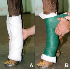 How to Wrap a Bowed Tendon