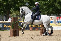 For France :Caroline Poyet brun & Mundo Working Equitation in the World Championship WAWE Austria 2014 ©Laurent Vilbert