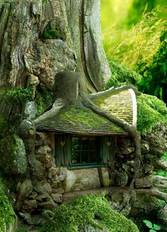 Tree House in the Forrest (wish trees were big enough so that this could really be my home)