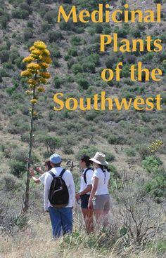 Medicinal Plants of the Southwest