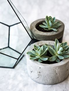 office plant, marble table, terrarium, concrete planters | Harper and Harley