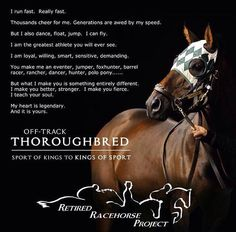 weareescapingvelocity: Saw this on Facebook and couldn't help but share. While I believe any breed can be talented and amazing there is a special place in my heart for thoroughbreds.